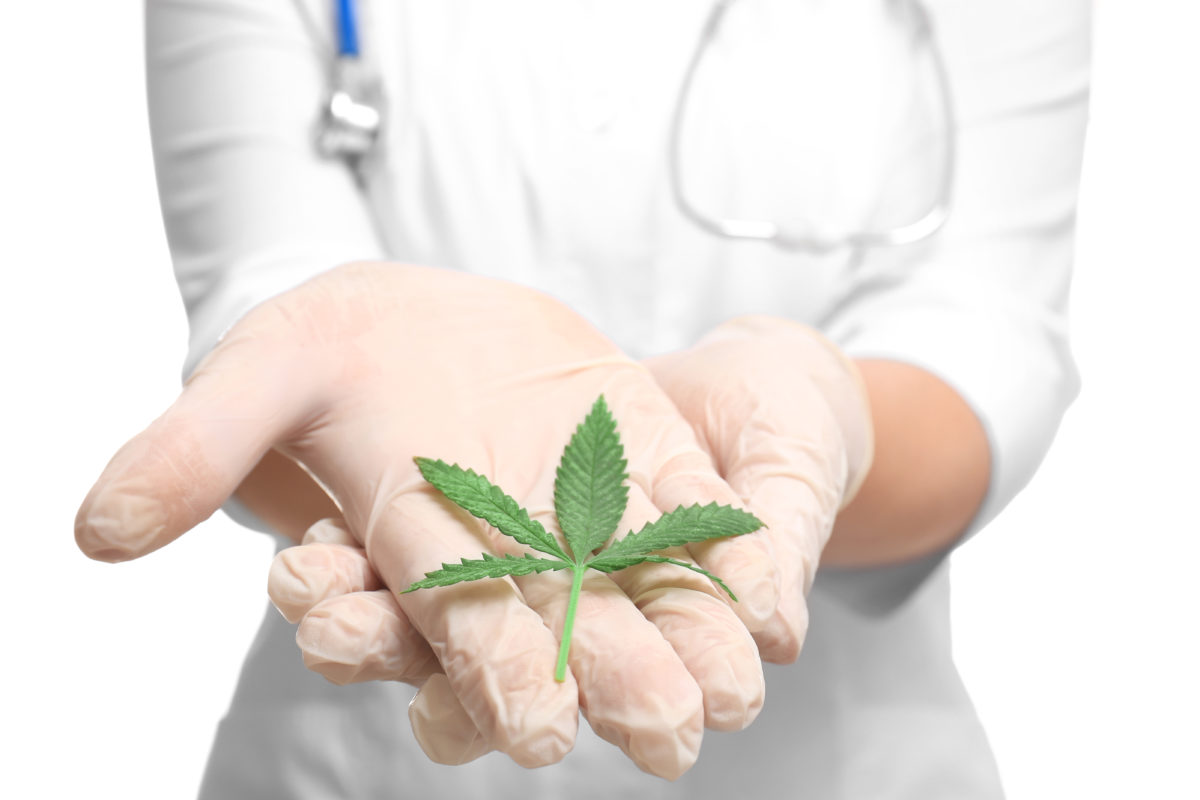 Doctor holding cannabis leaf